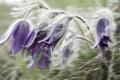 Картинка цветы, природа, сон, флора
