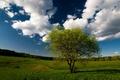 Картинка дерево, небо, трава