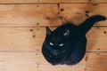 Картинка eyes, cat, wood