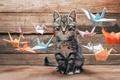 Картинка усы, бумаги, разноцветные, выбор, cat, летающее, хвост, котяра, красочной, журавлики, разные, интерес, оригами, боке, wallpaper., ...