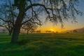 Картинка дерево, трава, горы, закат