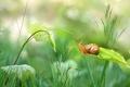 Картинка листья, трава, стебель, улитка, зелень, боке
