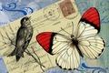 Картинка фон, бабочка, птица