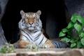 Картинка тигр, хищник, лежит, полосатый, отдыхает