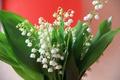 Картинка цветы, ландыш, букет, весна, ландыши, белые