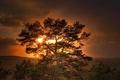 Картинка Дерево, солнце, закат