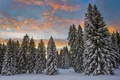 Картинка утро, Швейцария, ели, снег, зима, облака, лес