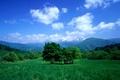 Картинка небо, горы, луг, деревья, трава, долина, облака