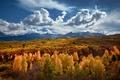 Картинка осень, горы, Колорадо, США, штат, золотой лес