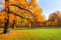 Картинка лавка, парк, природа, скамейка, скамья, деревья, листья, желтые, трава, осень, пейзаж