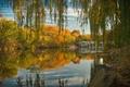 Картинка осень, деревья, озеро, пруд