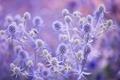 Картинка поле, цветок, листья, макро, растение, стебель, луг