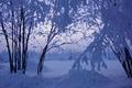 Картинка деревья, снег, лес, зима