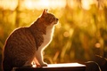 Картинка кошка, свет, природа, боке, лето, солнце, сидит, трава, кот