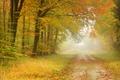 Картинка лес, туман, дорога, деревья, осень, пейзаж, листья