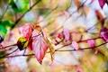 Картинка макро, природа, красные, боке, дерево, желтые, ветки, осень, Листья