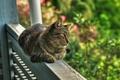 Картинка веранда, перила, обои от lolita777, природа, сад, зелень, лето, обзор территории, кот