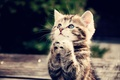 Картинка кот, котенок, лапки, бедолага, попрошайка