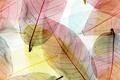 Картинка abstract, macro, transparent, leaves, autumn, листья