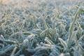 Картинка иний, трава, холод