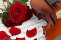 Картинка цветы, ноты, музыка, скрипка, розы, лепестки, music, книга, flowers, violin, book, petals, roses, sheet music