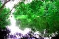 Картинка спокойствие, Санкт-Петербург, природа, ЦПКИО, деревья, листья, вода, ярко, река