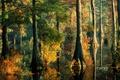 Картинка вода, деревья, разлив, осень, лес, листья