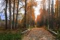 Картинка Деревья, Трава, Осень, Листья, Дорога