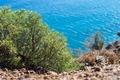 Картинка green, kos, island, bush, sun, blur, sea