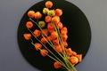 Картинка цветы, натюрморт, осень, тарелка