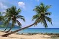 Картинка океан, пальмы, берег, экзотика