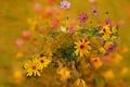Картинка осень, букет, лепестки, стебель