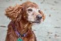 Картинка pet, supermodel, dog