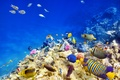 Картинка underwater, coral, коралловый риф, рыбки, reef, fishes, подводный мир, tropical, океан, ocean, world