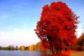 Картинка озеро, осень, дорога, деревья, пруд, город, листья