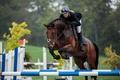 Картинка спорт, конь, прыжок