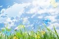 Картинка трава, небо, бабочки, атлас, коллаж