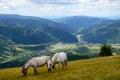 Картинка поля, склон, горы, панорама, лошади, луг, трава, долина, леса
