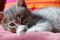 Картинка кот, лежит, моется