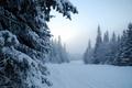Картинка туман, деревья, снег, зима