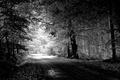 Картинка дорога, деревья, Пейзаж, чёрно-белое, природа