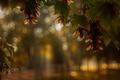 Картинка макро, ветки, природа, листва, боке