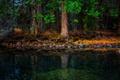 Картинка лес, деревья, река, камни, берег, елки, мох, сосны, хвоя