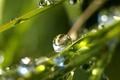 Картинка Утро, роса, трава, капли