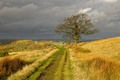 Картинка дорога, осень, дерево