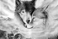 Картинка Рисунок, волки, пара, нежность, любовь, взгляд