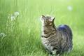 Картинка кошка, котэ, трава, кошак, вверх, смотрит, кот