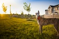 Картинка собака, дом, свет