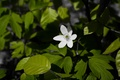 Картинка Ground, Woods, Flower, Green, Leaves, Nature, Earth, Forest, Blossom