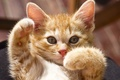 Картинка лапы, рыжий, котёнок